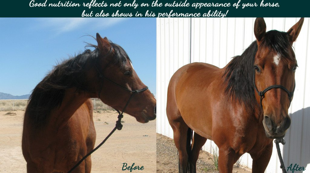 Equine Nutrition Consulting - Animal